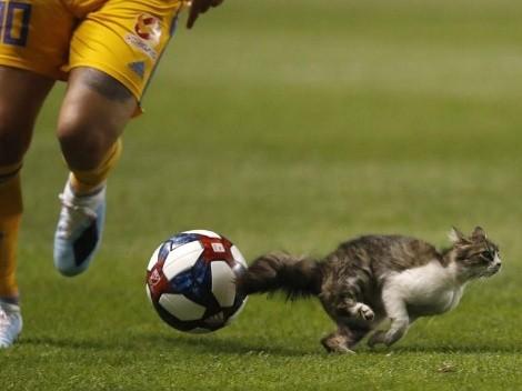 Lindo gatito se metió a la cancha y André-Pierre Gignac casi lo atropella
