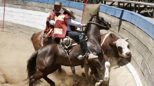 Gerente de la Federación de Rodeo asegura que no hay maltrato a los animales